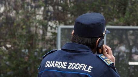 Guardie zoofile in servizio (Fotoschicchi)