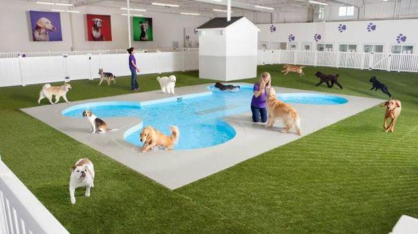 Piscine Per Cani E Boschi Per Gatti Un 39 Arca Per Gli