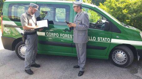 Controlli della Forestale (Foto di repertorio)
