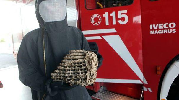 Un vigile del fuoco con un nido di calabroni (Ravaglia)