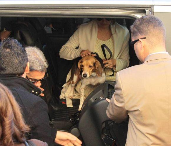 Il cane Scout al funerale della padrona Ashley Olsen (Umberto Visintini/NewPressPhoto)
