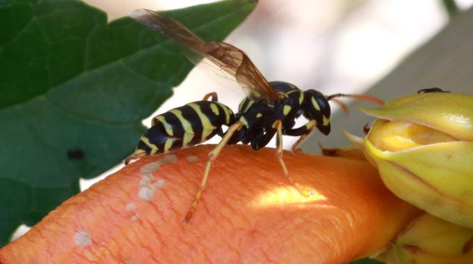 Una vespa (Olycom)