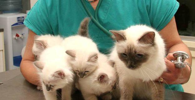 9 - A lezione...di gatto