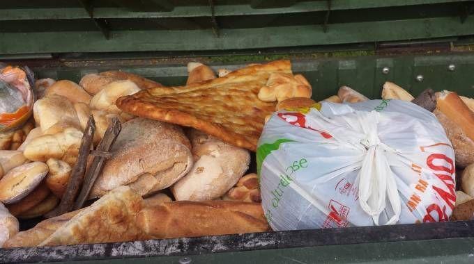 Risultati immagini per pane nei cassonetti