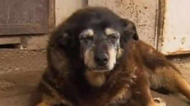 Maggie morta nella sua cuccia era il cane pi vecchio for Casa progetta il trotto del cane