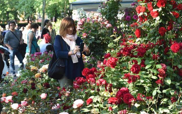 Bologna ai giardini margherita torna la kermesse dei - Giardini e fiori ...