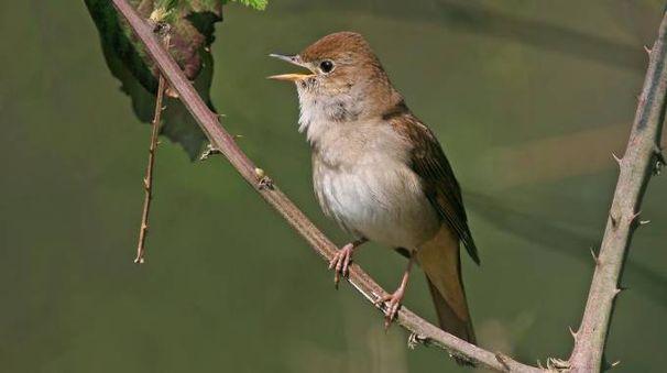 Un uccello