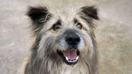 Cane in una foto Olycom