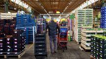 Cesena, l'interno del mercato ortofrutticolo (foto Luca Ravaglia)