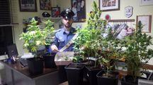 Le piante sequestrate dai carabinieri