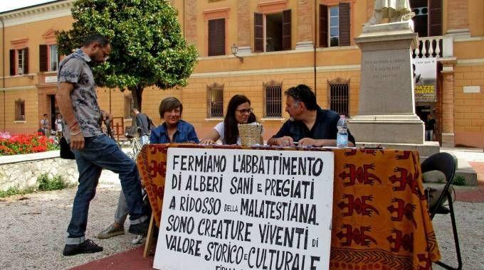 Cinquemila firme in difesa dei lecci della Malatestiana