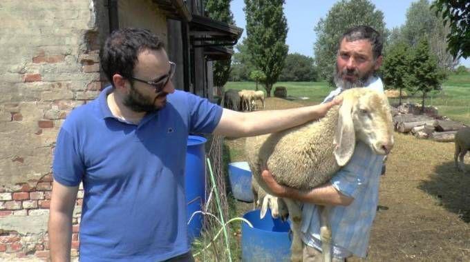 Perde il lavoro e ricomincia con un allevamento di pecore
