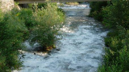Le piante nel letto del fiume Adda