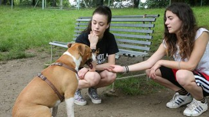 Castenaso, sconto sulle tasse per chi adotta un cane