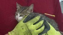 San Benedetto, i vigili del fuoco salvano un gattino imprigionato da giorni