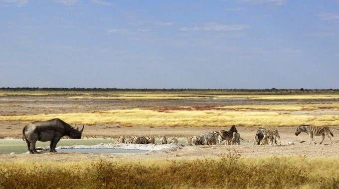 Uno foto di Caterina Migno guida professionista Afga (African Field Guides Association)