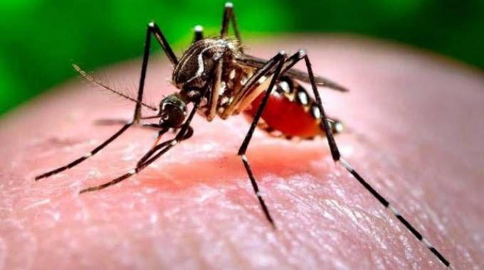 Il virus Zika è causato dalle zanzare