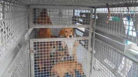 Alcuni dei cani salvati dalla casa degli orrori