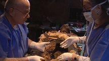 Il professor Fornaciari durante alcuni studi su una mummia