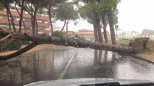Maltempo a Empoli nella zona di via Rozzalupi