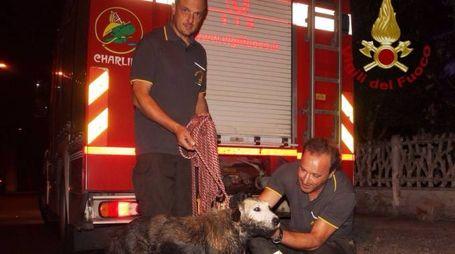 I vigili del fuoco col cagnolino salvato