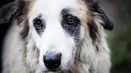 Torna il problema dell'abbandono degli animali