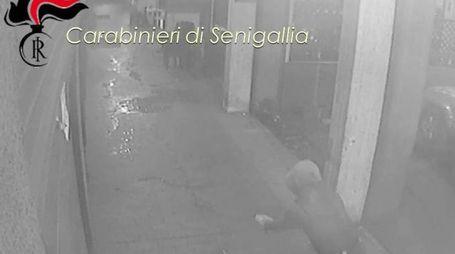 Un 28enne è stato arrestato con l'accusa di aver appiccato l'incendio al bar 'Quindi? Caffè' di Senigallia: un'immagine ripresa dalle telecamere di videosorveglianza