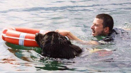 Un cane bagnino in azione