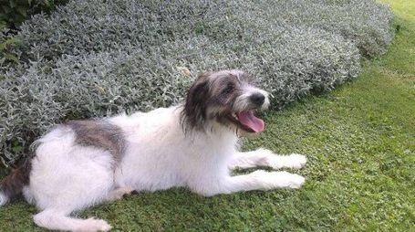 Il cucciolo nel giardino della sua nuova casa