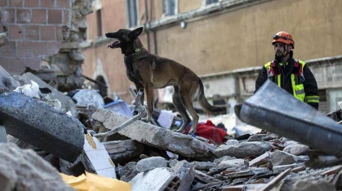 Terremoto, i cani cercano tra le macerie di Amatrice (Ansa)