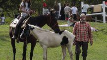 Le Iniziative con i cavalli attirano sempre curiosi e turisti (foto di repertorio)