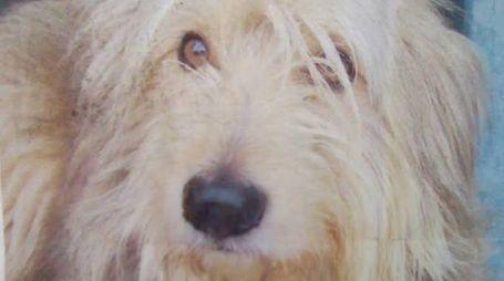 Rocky il cane di Rocco che era stato 'rapito' sul treno e ritrovato a La Spezia