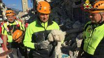 Terremoto ad Amatrice, i vigili del fuoco di Livorno salvano un cagnolino tra le macerie