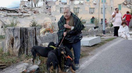 Amatrice, un anziano ferito e sotto choc con i suoi cani (Lapresse)