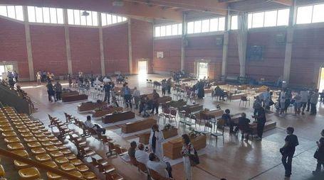 Terremoto, la palestra di Ascoli dove sono state sistemate le bare delle vittime (Ansa)