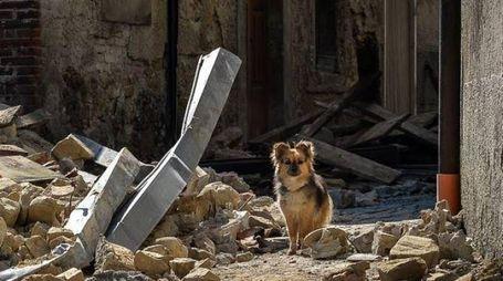 Secondo l'Enpa sono oltre duecento gli animali soccorsi dopo il sisma