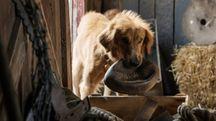 Una scena del film A Dog's Purpose – Foto: Amblin Entertainment