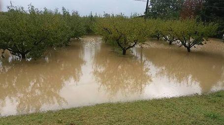 Terreni sommersi dall'acqua nel bagnacavallese, foto Scardovi
