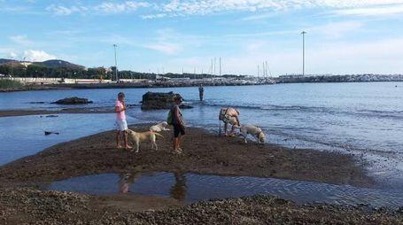 Cani e padroni passeggiano sulla battigia
