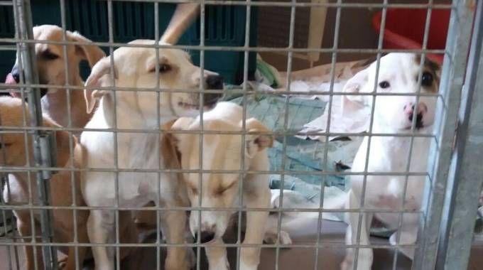 Alcuni dei cuccioli arrivati al canile