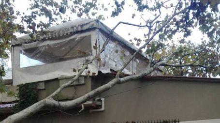 """Il grosso ramo che è caduto sul """"Pino sul tetto"""""""