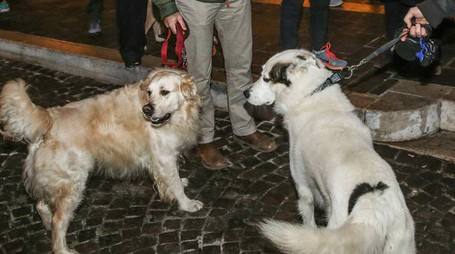 Cani in piazza, durante una delle tante manifestazioni.  A destra, Erika Del Bianco, una delle avvocatesse del team