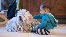 Max, la figlia di Mark Zuckerberg, in compagnia del cane Beast (Facebook)
