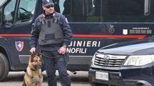 In piazza delle Vettovaglie sono intervenuti anche i cani antidroga dei carabinieri