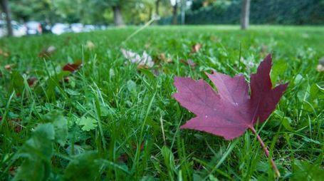 Bologna offre molti itinerari per gli amanti dell'autunno (Schicchi)