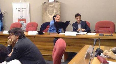 Il gatto Puma star al Municipio 7