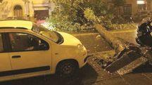 Maltempo, l'albero crollato in viale Corsica a Firenze