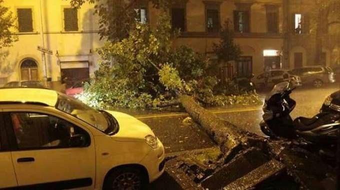 L'albero crollato in strada l'altra sera in viale Corsica: il traffico è stato interrotto, i vigili del fuoco hanno poi liberato la sede stradale