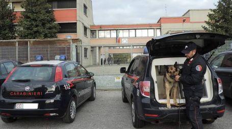 Un militare dell'Arma con un cane addestrato