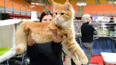 'Scatti felini' al Modigliani Forum